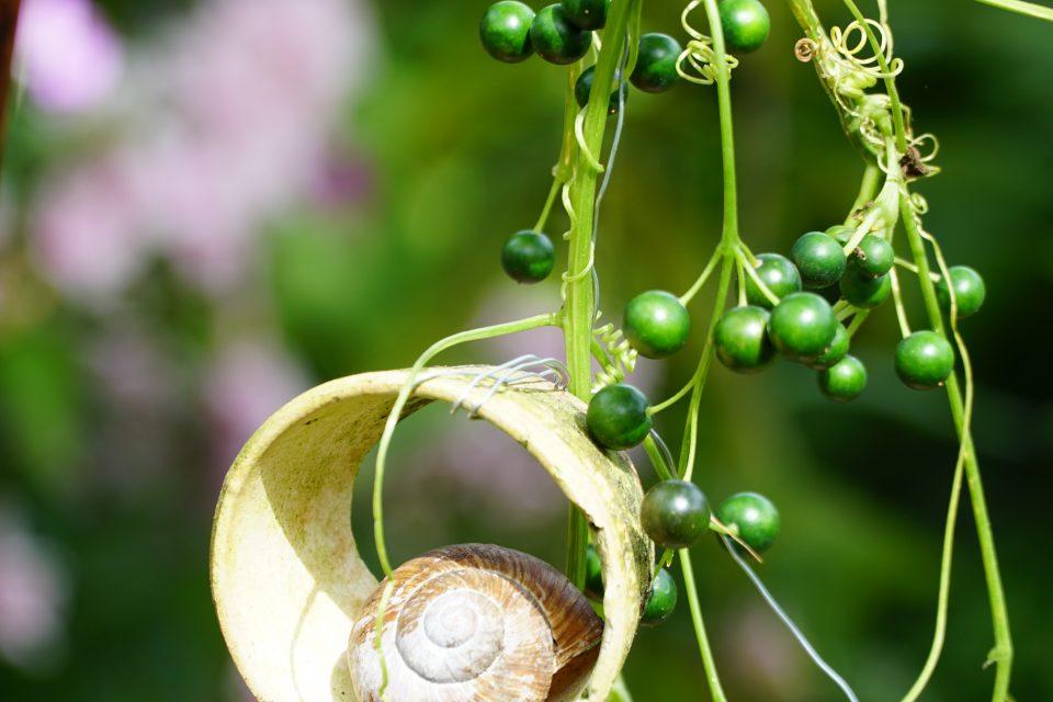 Gartendekoration, Lore-Keramik, Foto: Svenda Hoffmann, Brausezimt